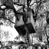 Căsuţa din copac