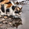 6 pericole de vară pentru pisicile care umblă pe afară