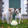 Vă invităm la nuntă…..HAM..HAM