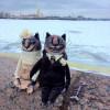 Elena Alekhina creatoarea păpușilor care au cucerit Instagramul
