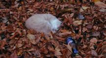 CBD este sigur pentru pisici?
