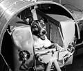 Cãlãtoria de pe strãzile Moscovei spre stele, povestea tristã a câinelui cosmonaut Laika
