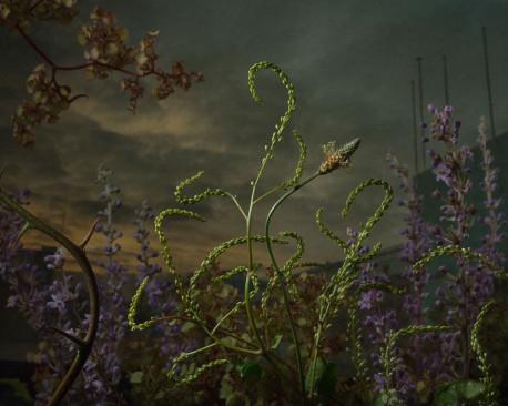 """Botanical Inquiry""- fotografii de Daniel Shipp"