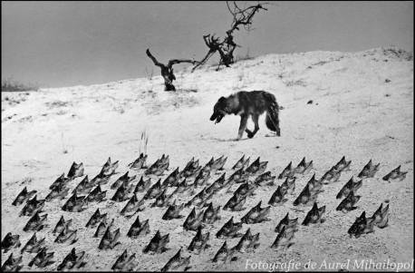 Proprietarul norilor: Aurel Mihailopol, unul dintre cei mai mari fotografi români